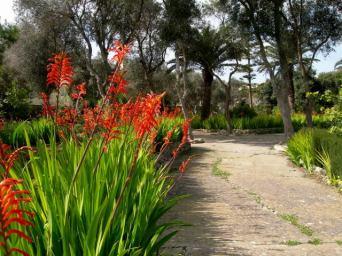 Gozo park